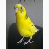 Передержка (присмотр, гостиница, зооняя ) птиц