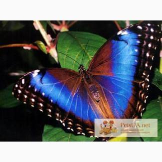 Живые бабочки в Киеве