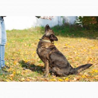 Отдам в хорошие руки собаку Миру, стерилизована