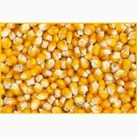 Пшеница, кукуруза - фуражная для кормовых целей