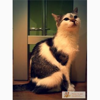 Принцесса - кошка на счастье в доме!.