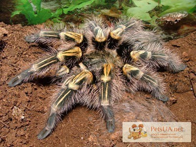 Фото 1/1. Продам паука