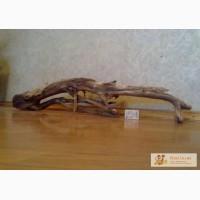 Продам ивовые коряги(корень)