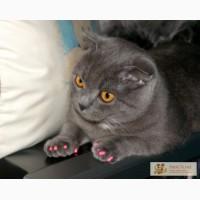 Антицарапки для котов, кошек и собак