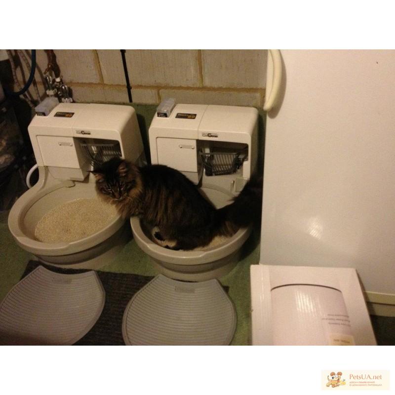 Туалет для кошек автоматический своими руками