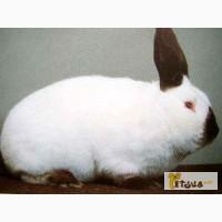 Полнорационный комбикорм для кролей ТМ «Агро Люкс»