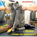 Тюнинг котов и кошек. Оставьте хлопоты профессионалам