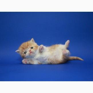 Полосатик мраморёныш. Экзотический мальчишка котёнок