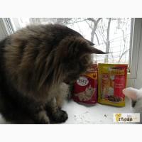 Корм Friskies и Мяу - мясные консервы для кошек