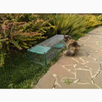 Живоловушка для кота с педалью метровая. Котоловка ВИДЕО. Живоловка на куницу, норку, хоря