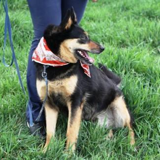 Макбет – молодая жизнерадостная собачка ищет заботливую семью