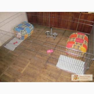 Домашний загон для содержания щенков или котят 6-секций (видео)