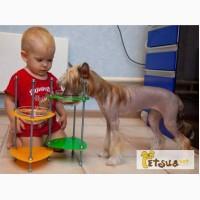 Кормушки для собак и кошек, стильные, красивые, регулируемые