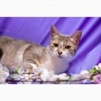 Маргоша, Очень Добрая Кошечка в надежные ручки