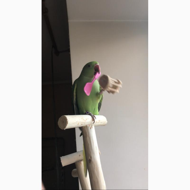 Фото 1/3. Улетел ожереловый попугай