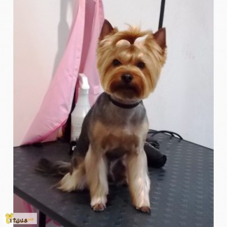 Стрижка собак. Краматорск