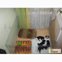 Вольер - манеж для собак/щенков или котят 100х100хh60 (доставка или самовывоз по городу)