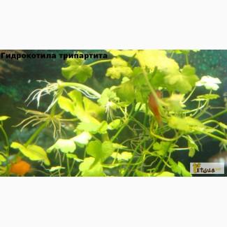Выбор живых аквариумных растений