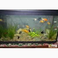 Уборка аквариума