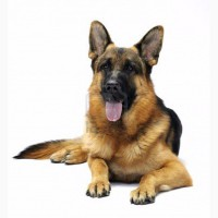 Корм для собак Каша быстрого приготовления «7 злаков»ТМ «МаксимуМ»
