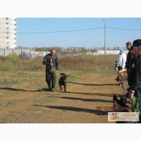 Дрессировка собак г. Одесса, пос. Котовского