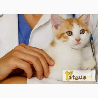 Veterinariya.info Ветеринарный портал:домашние животные, максимум полезной информации