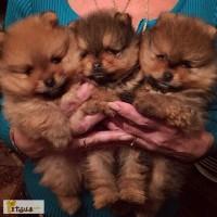 Вызов ветеринара на дом Харьков