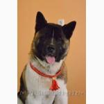 Обереги, украшения и аксессуары для собак