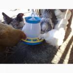 Кормушка бункерная для птицы