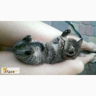 Отдам котенка(девочку)в хорошие руки