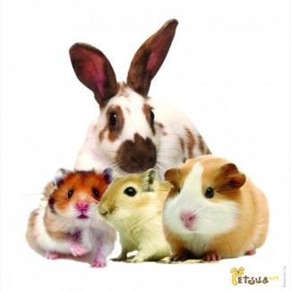 Комбикорм, корм для грызунов, шиншилл, морских свинок, крыс ТМ «МаксимуМ»