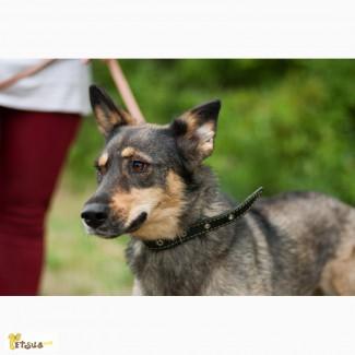 Зита, стерилизованная собака