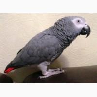 Возьму в дар или куплю попугая жако или другого большого попугая