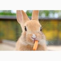 Комбикорм, корм для кроликов от 1, 5 месяцев ТМ «МаксимуМ»