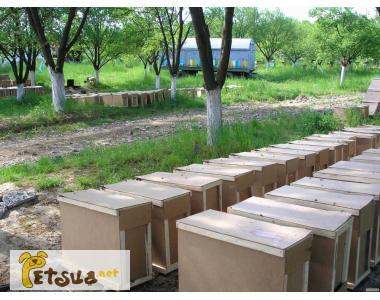 Фото 2. Продаются пчелопакеты, пчелосемьи Карпатской породы 2019семьи, матки