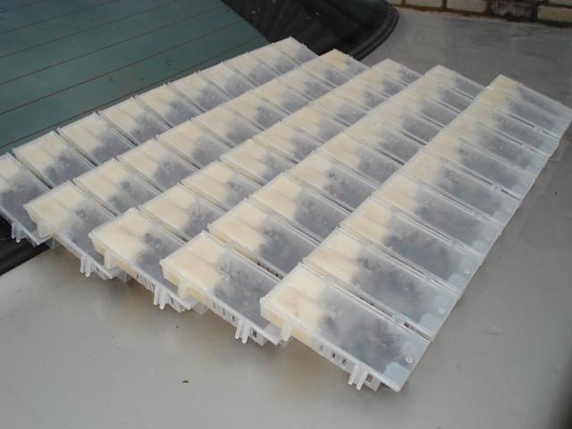 Фото 3. Продаются пчелопакеты, пчелосемьи Карпатской породы 2019семьи, матки