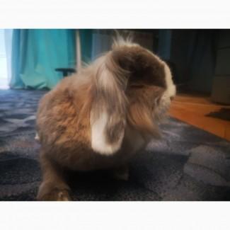 Наш кролик Хом#039;як шукає нову родину