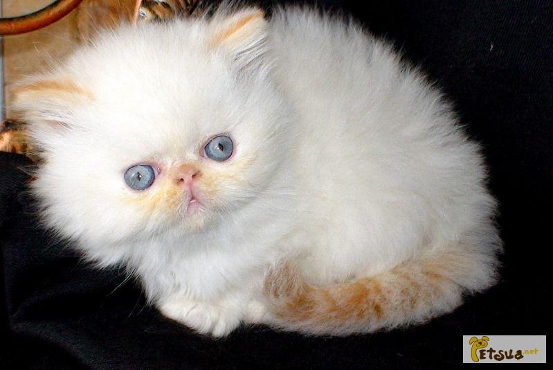 коты экстремалы фото спутниковая