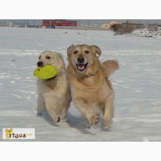 Выгул собак в Ильичевске