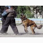 Дрессировка собак:Умное воспитание собак, развитие и укрепление их психики