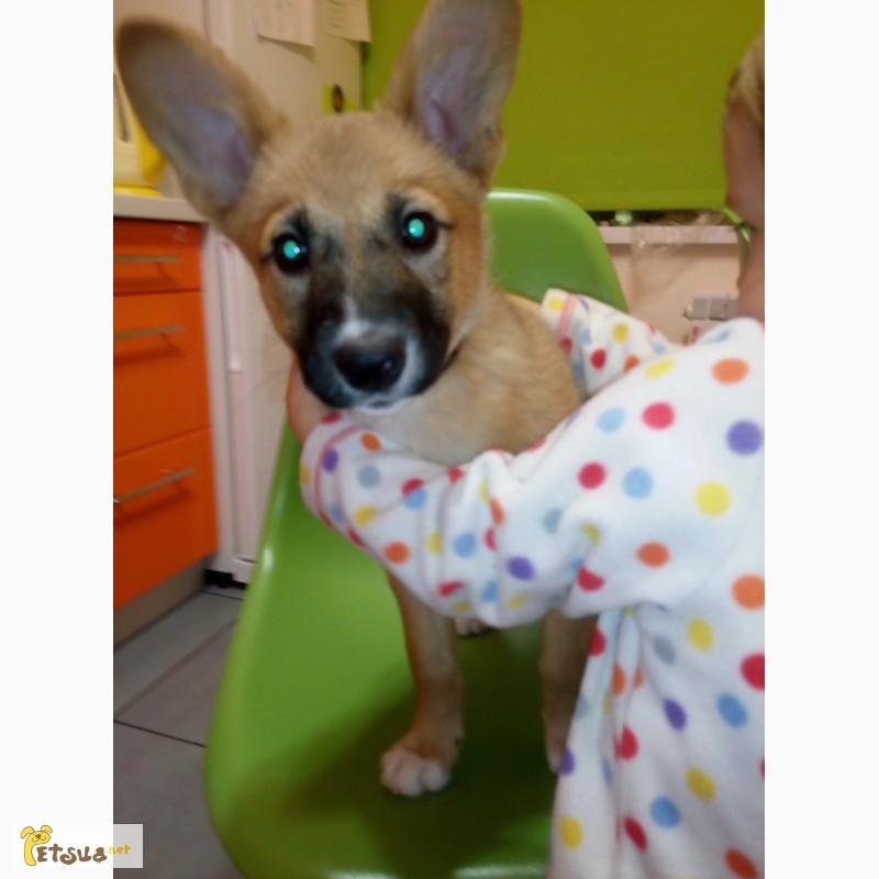 Отдам в добрые руки щенка дворняжки, Киев — PetsUA Дворняжка Щенок