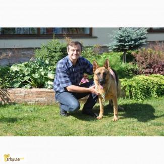 Кінолог з Коломиї.Дресирування собак, он-лайн консультації