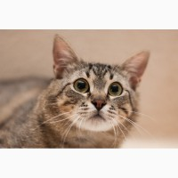 Отдам в хорошие руки годовалого кота Тимошу