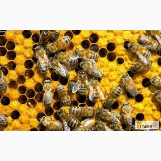 Продам пчел. Рамка украинская