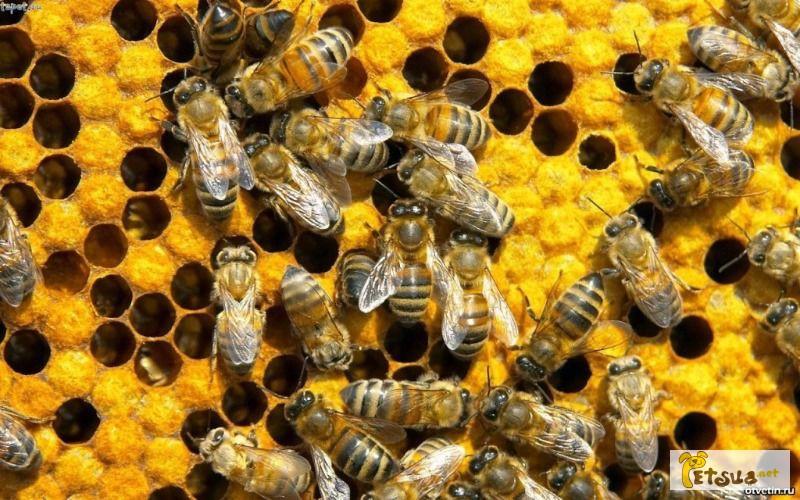 Фото 1/1. Продам пчел. Рамка украинская