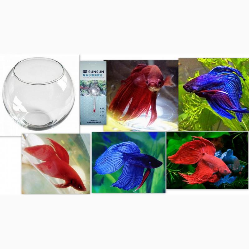 Фото 5. Компактный аквариум с эстетичным петушком идеально подходит для офиса