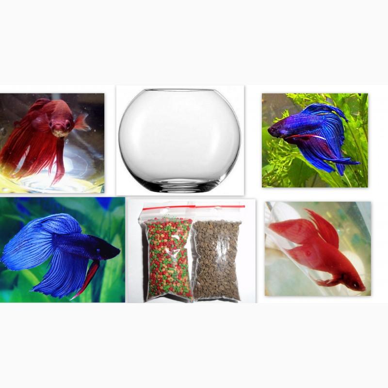 Фото 6. Компактный аквариум с эстетичным петушком идеально подходит для офиса