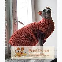Модная одежда для котов