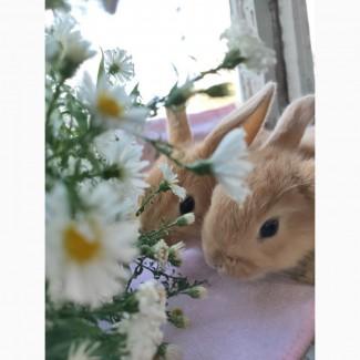 Отдам за символическую цену декоративных кроликов)