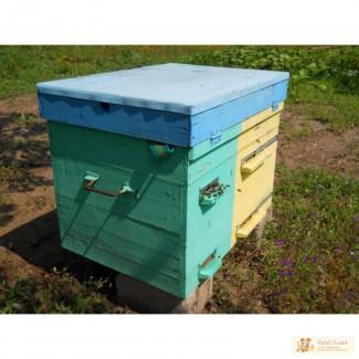 Продам ульи и пчел